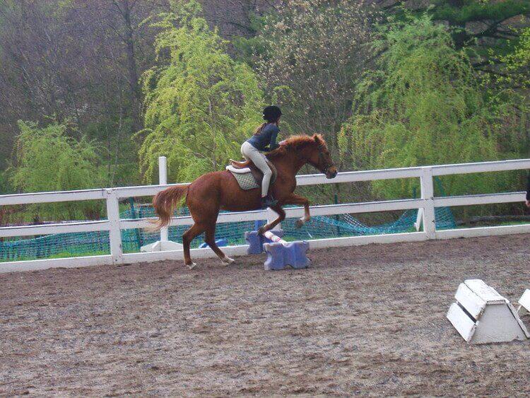 乗馬を楽しむ女の子