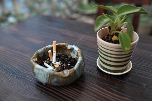 タバコと観葉植物